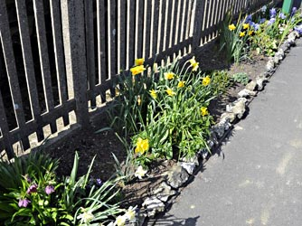 Flower beds at Kingscote - Derek Hayward - 25 March 2012