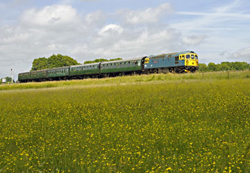 33103 amid the buttercups - Derek Hayward - 30 June 2013