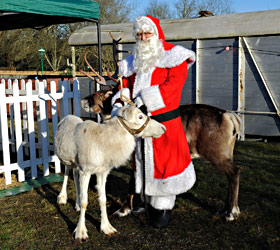 Santa with the reindeer - Derek Hayward - 13 December 2014
