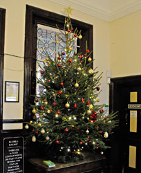 Christmas tree at Sheffield Park - Derek Hayward - 3 December 2014