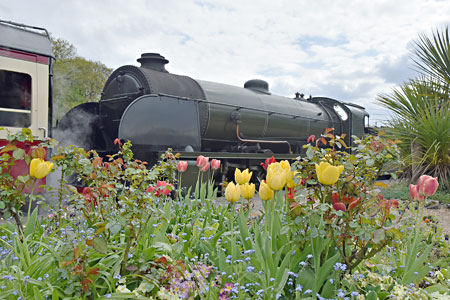 S15 and spring flowers at Horsted Keynes - Brian Lacey - 27 April 2015