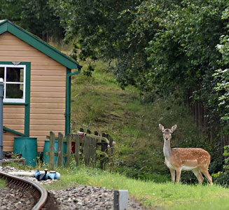 Deer at Kingscote - Brian Lacey - 12 September 2015
