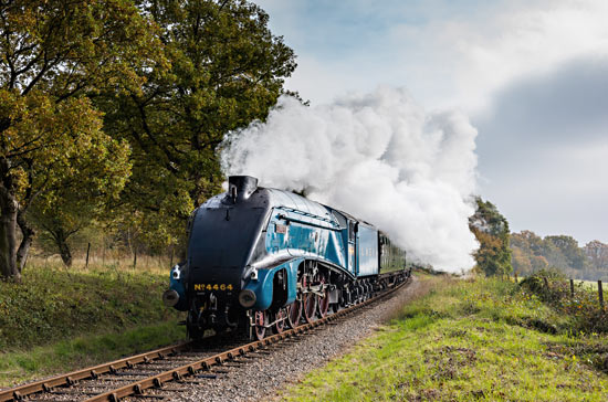 4464 Bittern, the star of the show - Andrew Shapland - 31 October 2015