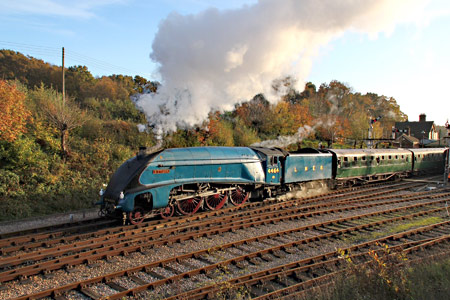 Bittern leaving Hortsed Keynes - Robert Else - 31 October 2015