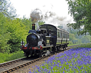 55 Stepney with Bluebell Special in Lindfield Wood - Derek Hayward - 3 May 2011