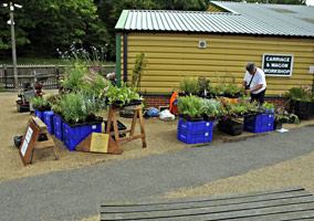 Plants for sale - Derek Hayward - 13 Aug 2011