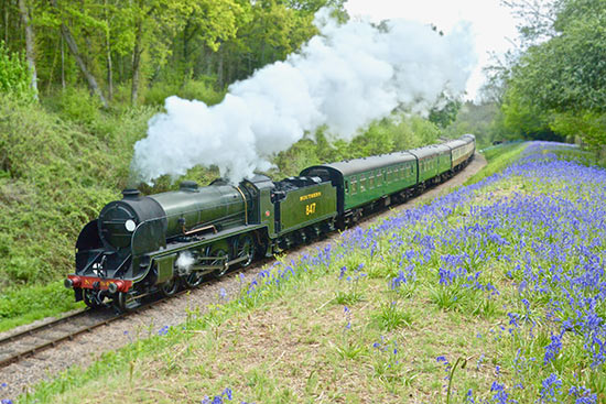 847 amidst the Bluebells - Steve Lee - 4 May 2019